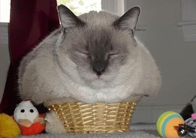 قطط طريفة تحشر نفسها في أماكن لن تتخيلها على الإطلاق