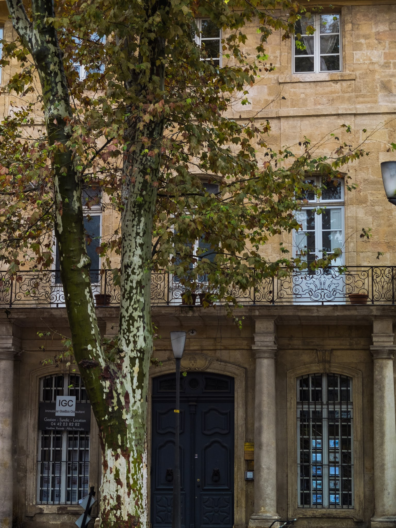 A plane tree outside a sandstone building on Cours Mirabeau in Aix-en-Provence.