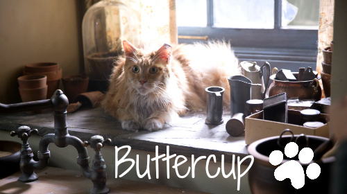 buttercup-the-hunger-games-cat
