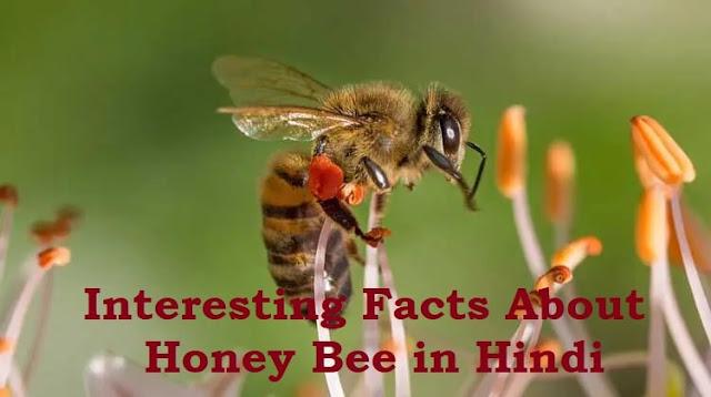 Essay on Honey Bee in hindi | Interesting facts मधुमक्खी के बारे में रोचक तथ्य