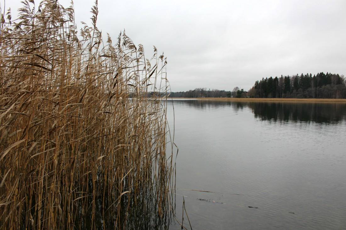 Ramsinniemen luonnosuojelualue, Ramsinniemi, Helsinki, Rouva Sana