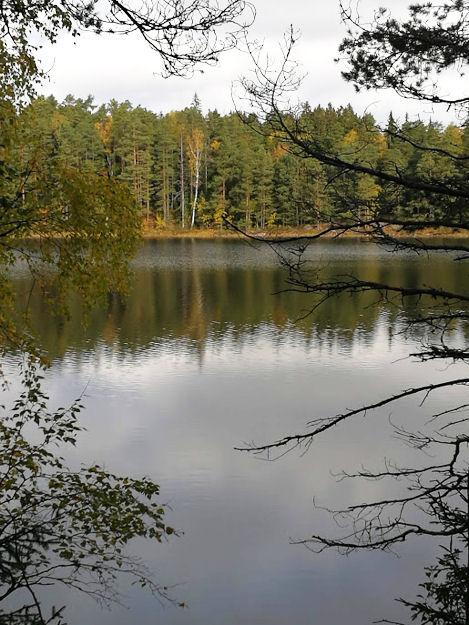 Näkymä rantapuiden lomasta täysin tyynelle järvenselälle, jonta takna syksyisen levollinen maisema. Oikealla edessä hiukan keloutuneen puun oksistoa.