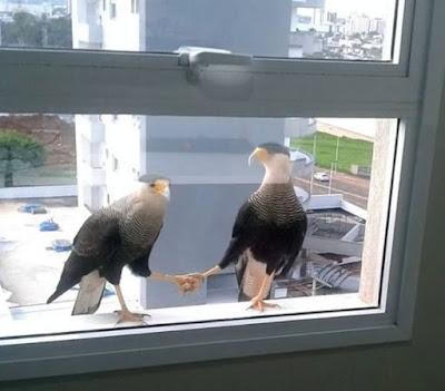 Zwei Vögel sitzen auf Fensterbrett