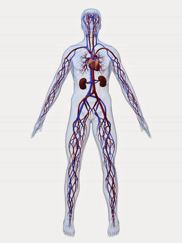 Corpo definem do extremidades