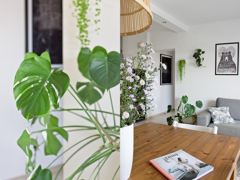 monstera, widok na salon, plakaty na ścianach, galeria ścienna, rośliny we wnętrzu