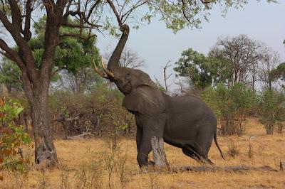 معلومات | اخطر 10 حيوانات على وجه الارض