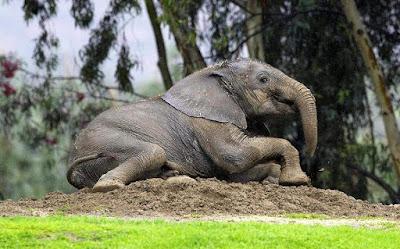 Μια Ελληνίδα ρίχνει φως στο DNA των ελεφάντων
