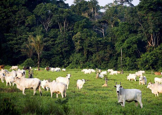 Do progresso da pecuária depende a vida de milhões de pesssoas