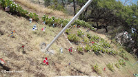 Country flags - Diamond Head mini garden, Oahu, HI