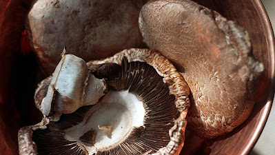 Mushroom Business in Pune