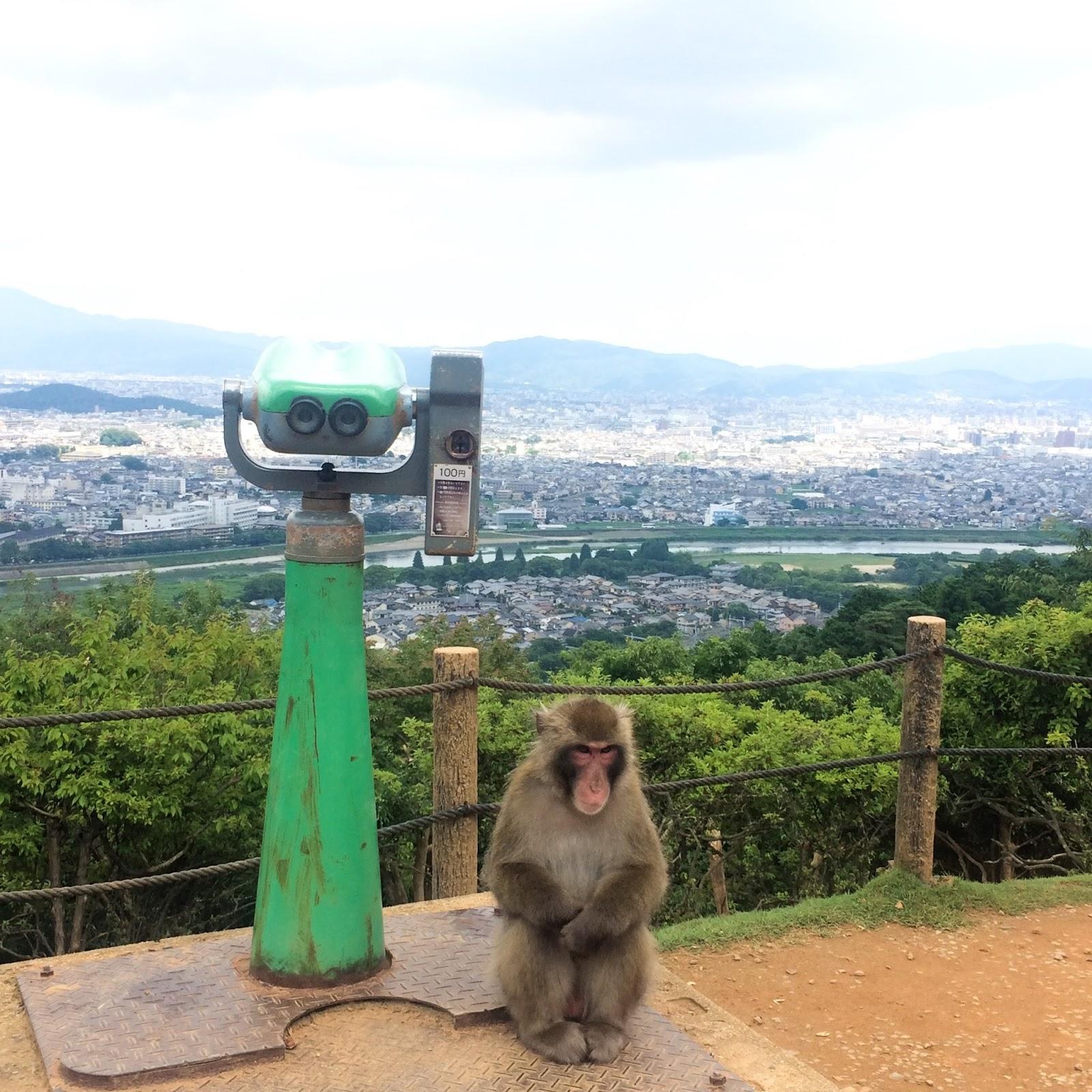 Iwatayama Monkey Park - A Make Believe World