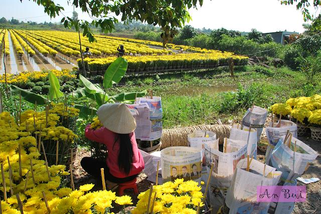 Ruộng hoa Mâm Xôi ở Sa Đéc