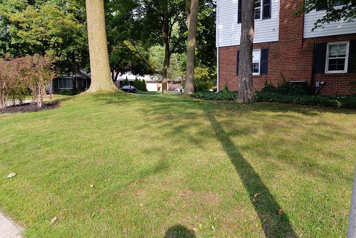 trugreen lawn service, trugreen lawn care