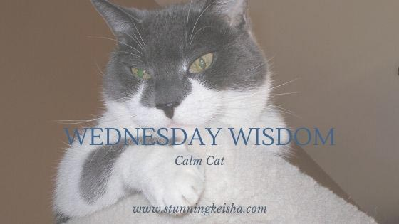 Wednesday Wisdom: Calm Cat
