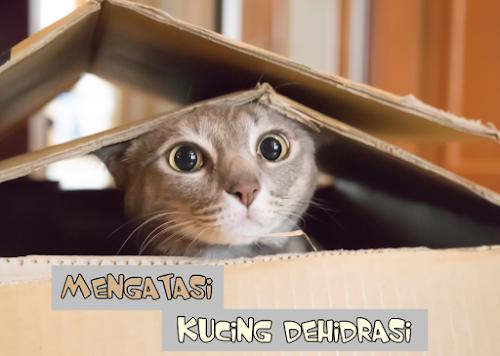 Kucing Dehidrasi tidak Mau Makan