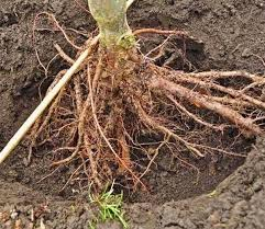 UseThe Roots Of Trees in Astrology