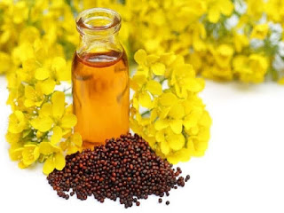 Mustard oil is helpful in darkening the white hair of the head.
