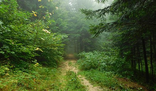 Leśne stoki Gloriety.