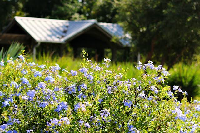 flowers-fall-porch-decor-farmhouse-athomewithjemma