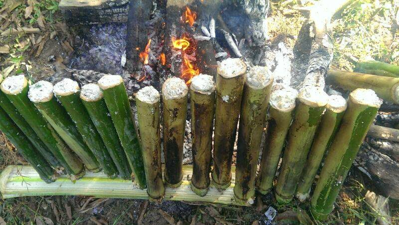 Rice being cooked in bamboo by the fire.