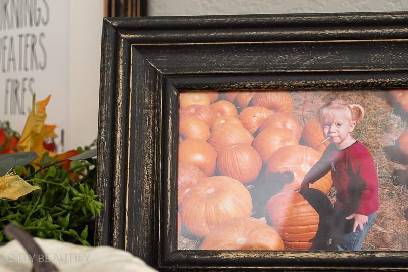 pumpkin patch picture