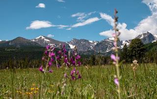Mountain Meadow - Photo by Kristina Volgenau on Unsplash