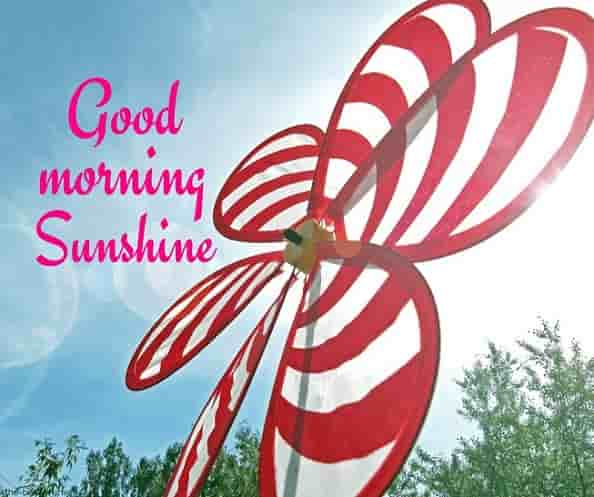 good morning sunshine pics