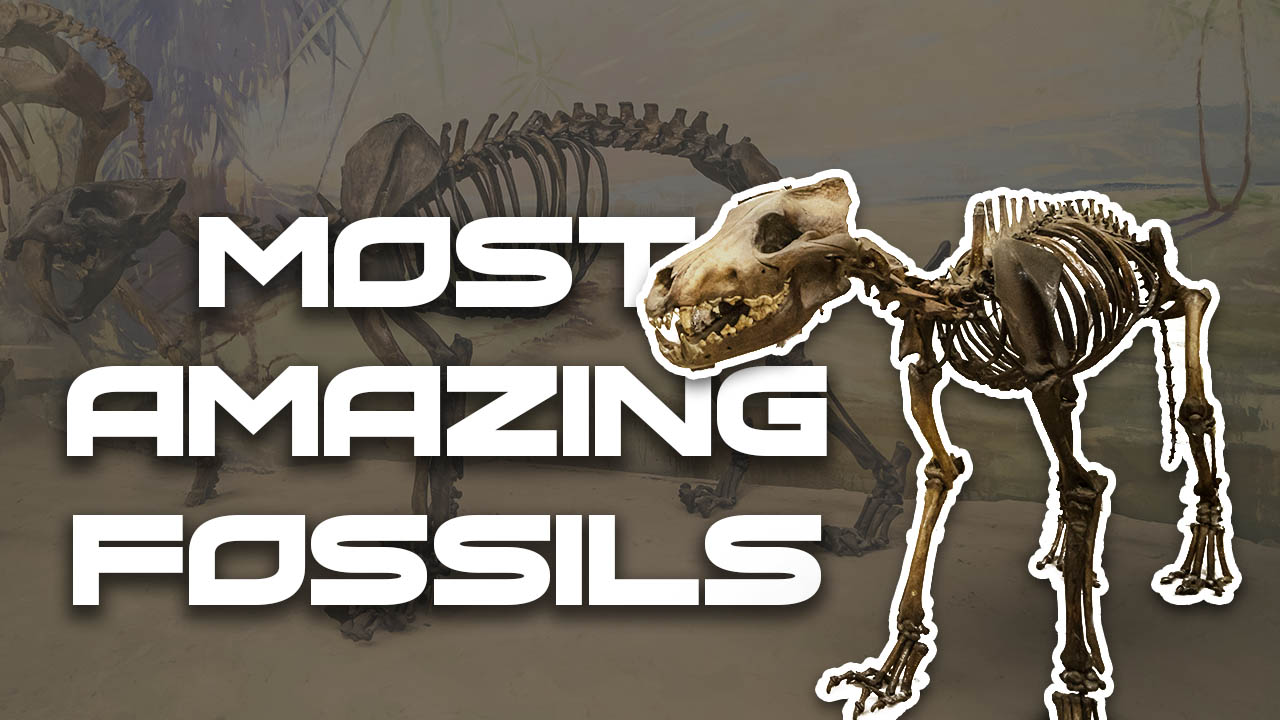 Most Amazing Fossils Found of All Time