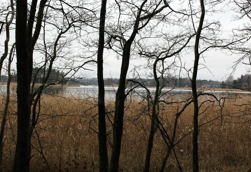 Ramsinniemen luonnonsuojelualue, Ramsinniemi, Helsinki, Rouva Sana