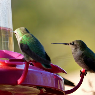 Hummingbird feeders can get dirty quick, whether you see it or not. Be sure you clean your feeder every few days.
