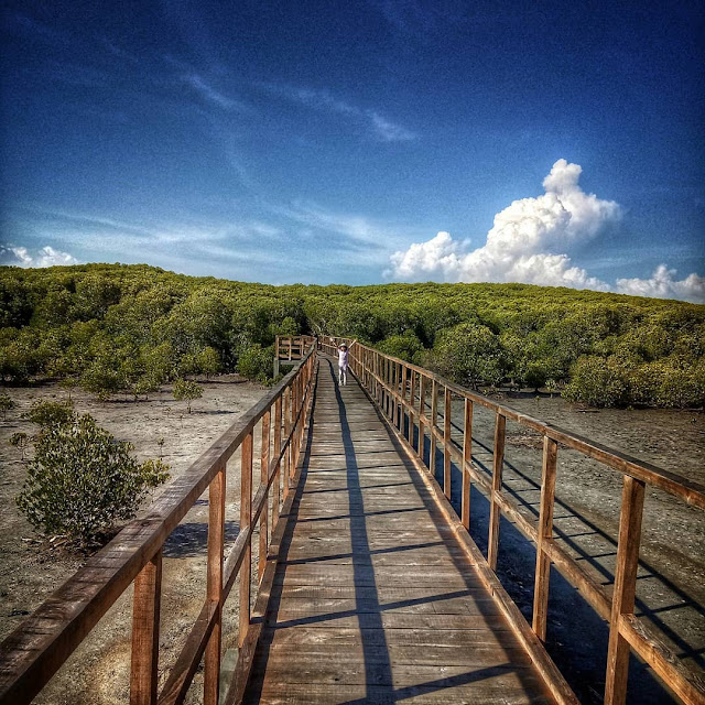 Jati Papak Alas Purwo Destinasi Wisata Alam Banyuwangi Yang Lagi Hits