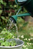 faktor penyerapan air, air tanaman, penyiraman, jual benih, toko pertanian, toko online, lmga agro
