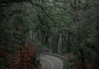 Hutan Roban terangker