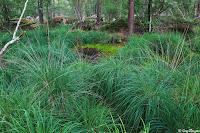 Mare australe de Belle Croix, Forêt de Fontainebleau