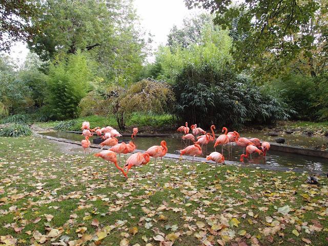 ZOO w Jardin des Plantes