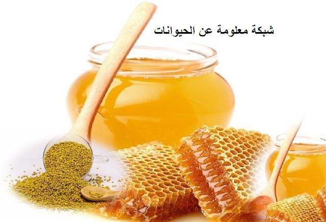 غذاء ملكات النحل,ملكة النحل,النحل,فوائد غذاء ملكات النحل,ملكات,العسل,تربية النحل,نحل,ملكة,وصفات طبيعية,مملكة النحل,بيض ملكة النحل,ملكة النحل تبيض,تلوين ملكة النحل,خلية النحل,انواع النحل,العسل الاصلي,العسل المغشوش,أنواع العسل,عسل الطلح,أفضل أنواع العسل,عسل حر,أنواع عسل النحل حسب الأزهار