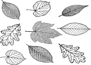 Plant-Morphology-in-hindi