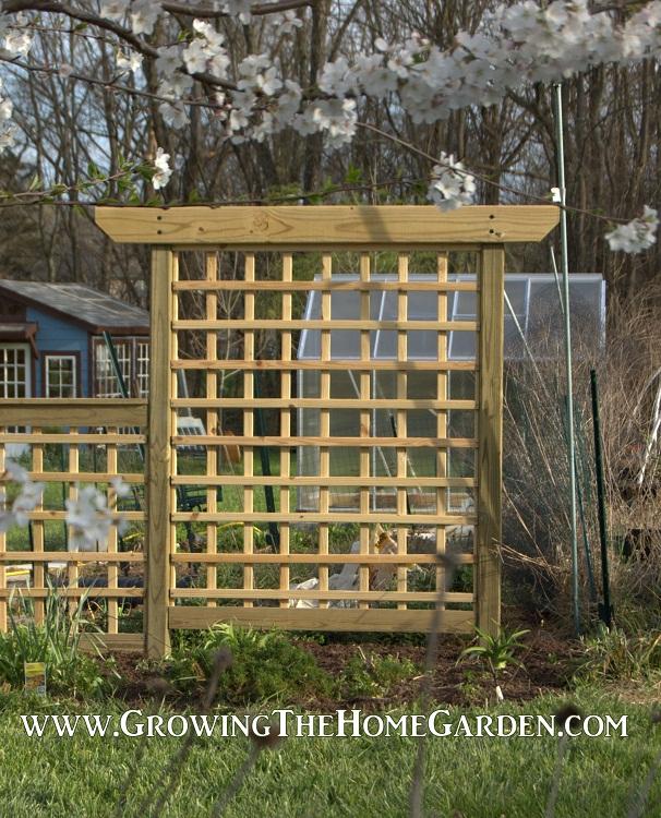 Building An Arbor Style Trellis Growing The Home Garden