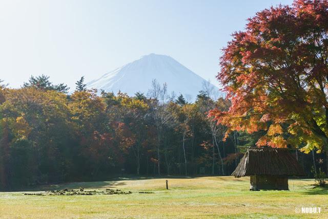 木々越しの富士山~西湖野鳥の森公園