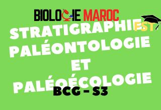 Stratigraphie, paléontologie, paléoécologie Cours+Td+Examens PDF BCG S3