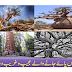 Interesting trees around the world | Ajeeb o gareeb darahat | Raaztv