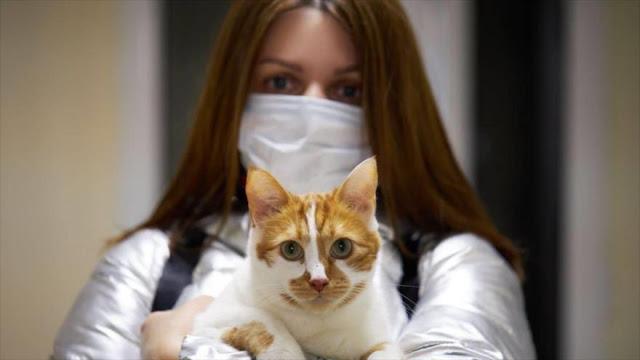 Un fármaco para los gatos puede tratar la COVID-19 en humanos