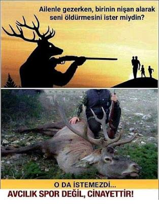 Avcılık spor değil, cinayettir, geyik, aile, av, avcılık, geyik avı, gökyüzü, güneş doğumu,