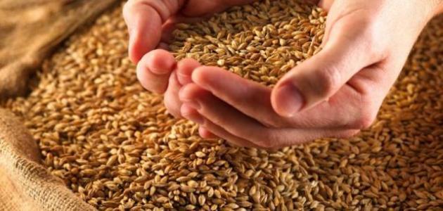 الأنواع الزراعية التي تجب فيها الزكاة و مقدارها