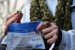 Uruguai legalizou maconha e elevou penas para tráfico de outras drogas