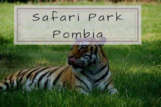 Safari Park Pombia cosa vedere - camper