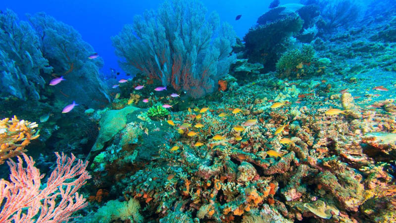 The absolute best places to dive in Bali