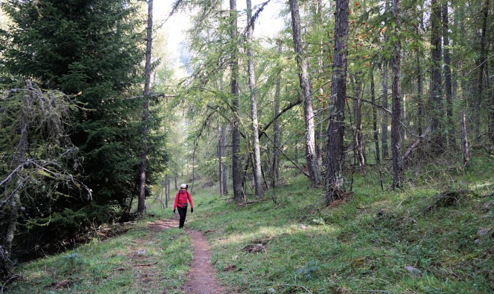 Les Bosquets forest above St-Dalmas