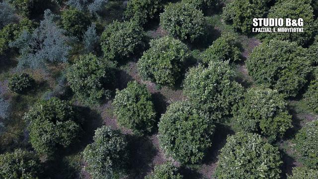 Οι επιπτώσεις της κλιματικής αλλαγής στην ανατολική Πελοπόννησο οδηγούν σε αναδιάρθρωση καλλιεργειών στα επόμενα χρόνια