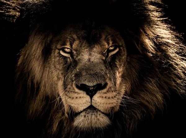 Đối mặt với nỗi sợ hãi sẽ mang lại cho bạn siêu năng lực